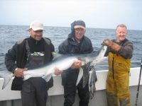 first-shark-of-the-season-2010