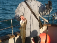 nice-pollack-while-fishiung-with-pierre-josse-group-nov-2010