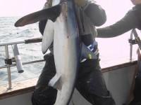 danielles-shark