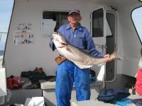 plooster-specimen-coalfish