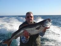 reneespecimen-coalfish-2008