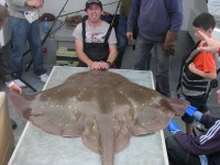 anthony-hislops-skate-total-length-87incheswing-span-72inches-aprox-230-280lbs