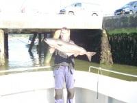 Andrews Specimen Coalfish.